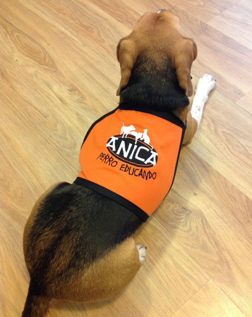 Bordado chaleco para perros xutchill bordados y - Delantal masterchef personalizado ...